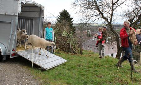 Ankunft der Schafe